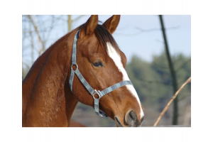 How To Help Your Horse With Winter Stress