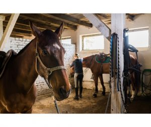 Owner in the stable with horses