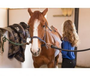 Stable vices can be very distressing for horse and owner.