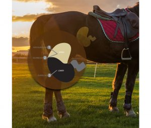AbActive is a proven equine probiotic.