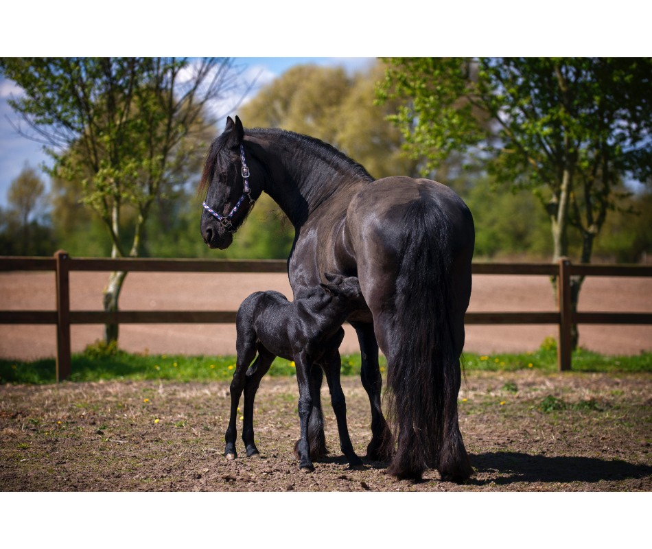 Broodmare and foal health is very important.