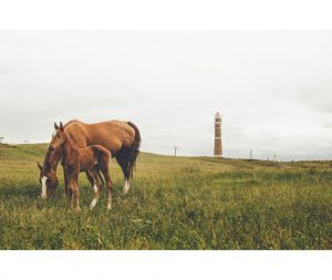 Intestinal parasites in horses may pose as threats to the horse's life
