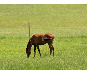 Causes of Gastric Ulcers in horses
